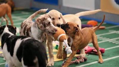 1391306122_puppy-bowl1