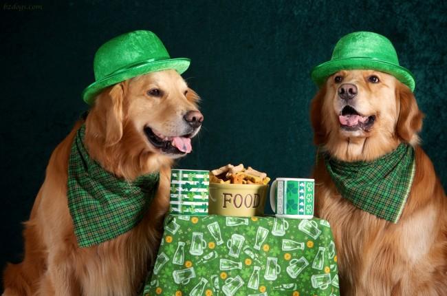 stpatty-dogs